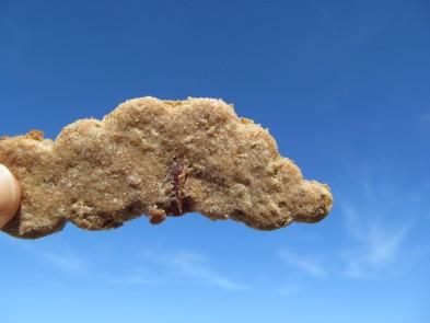 Turkey Bacon Dog Treat/Biscuit Recipe