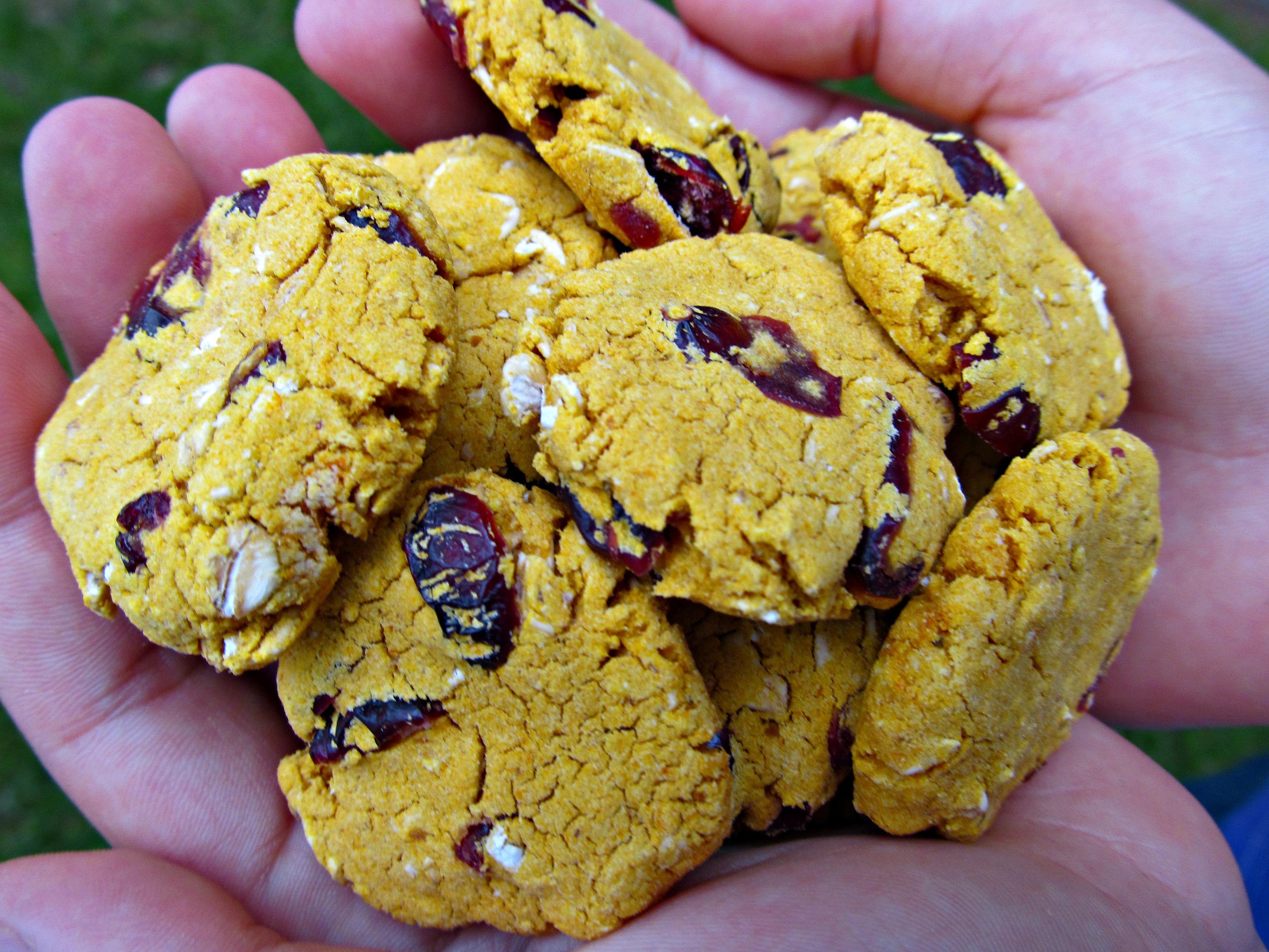 (gluten-free) pumpkin cherry dog treat/biscuit recipe