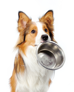 Cheapest Dog Food Site