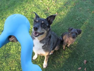 {fido dog treats} review