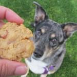 (wheat, gluten and grain-free) potato bacon peanut butter