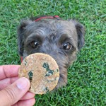 cheddar rosemary kale dog treat/biscuit recipe