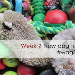 week 2 new dog toy {wag 52}