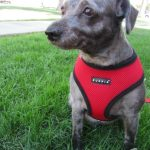 {Puppia Soft Harness} review