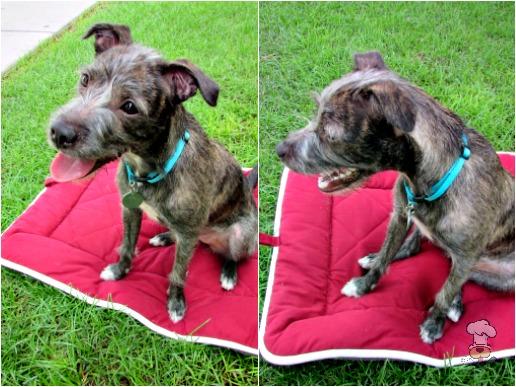 {Dog Gone Smart: Sleeper Cushion Review} Meet Rose