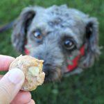(wheat and dairy-free) rosemary banana dog treat/biscuit recipe