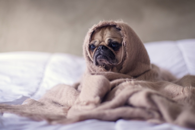 7 Signs You Should Take Your Dog To The Vet